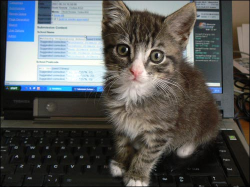 Telecommuting Kitten - Flickr user dougwoods - CC