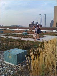 USPS green roof thrives in Manhattan